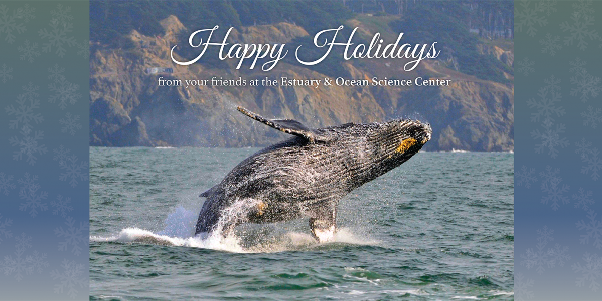happy holidays from your friends at the EOS Center. Breaching humpback image